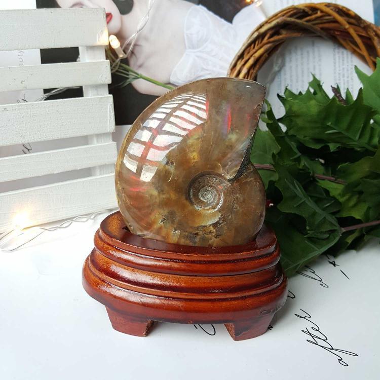 斑彩螺化石搭配螺化石木座摆件